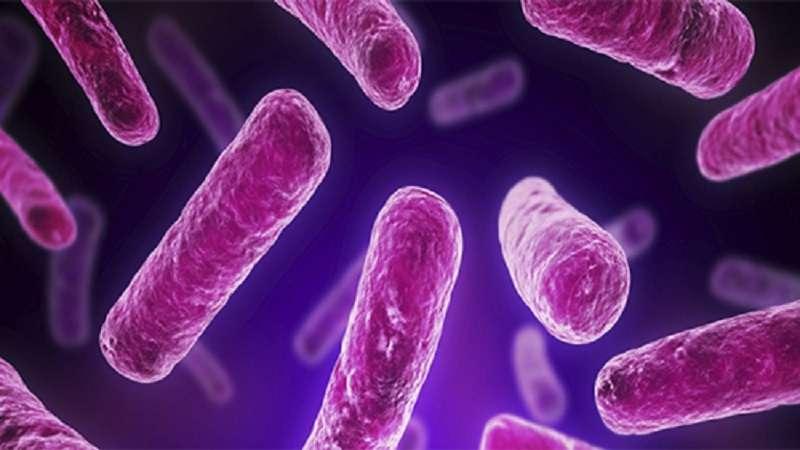 انواع مختلف پروبیوتیک ها ، نحوه مصرف ، مزایا و عوارض آن