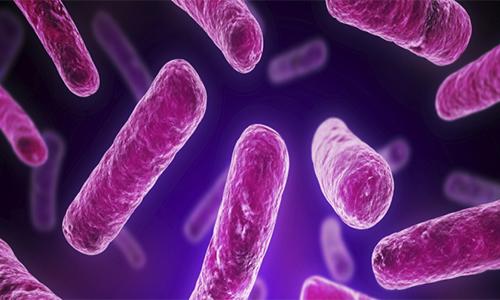 پروبیوتیک چیست؟