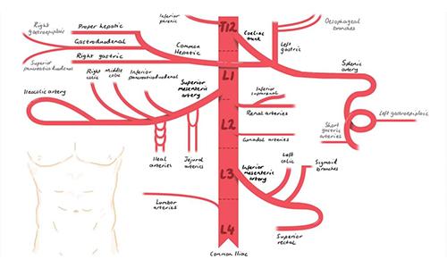 عروق خونی یا شریان انتقال دهنده خون