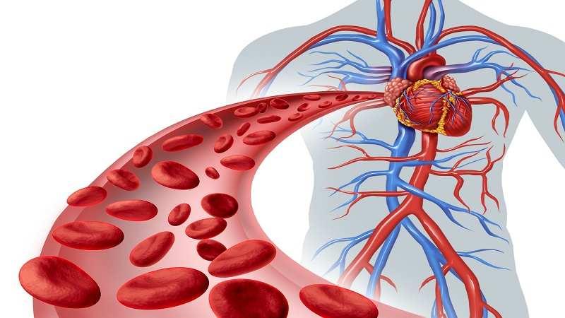 عروق خونی یا شریان های انتقال دهنده خون، مشکلات، آزمایش ها و درمانهای مربوط به آن